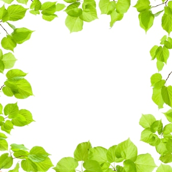 緑の葉フレームは白、境界線、背景に分離