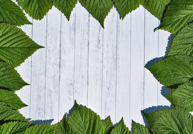 녹색 나뭇잎 프레임 흰색 나무에 격리입니다.