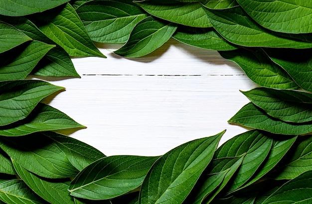 緑は白い木製の背景にフレームを残します。自然背景レイアウトデザインコンセプト。フラットレイ。上面図。