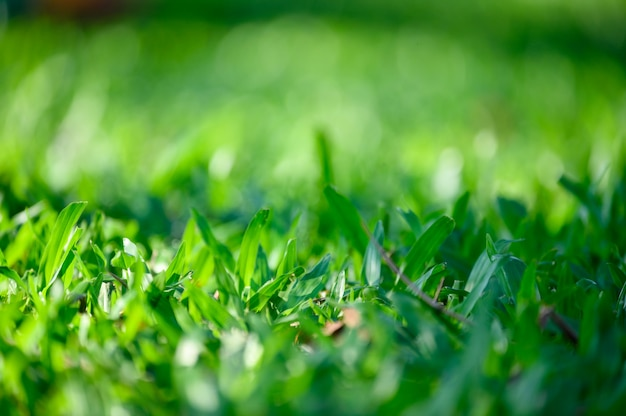 Green leaves on green grass background