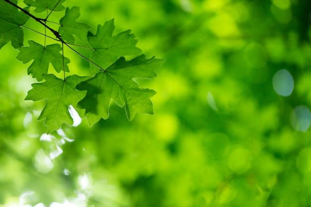 Green leaves on greenery