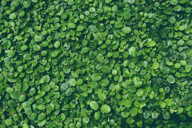 壁に成長している緑の葉