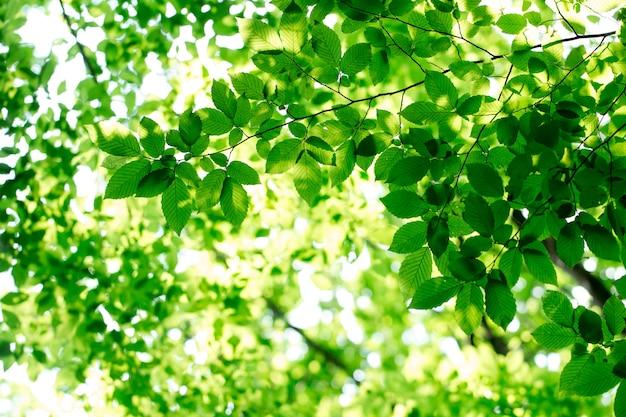 자연의 녹색 잎
