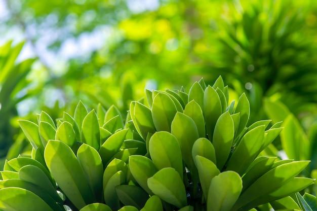 Зеленые листья в мелком фокусе для обоев и фона