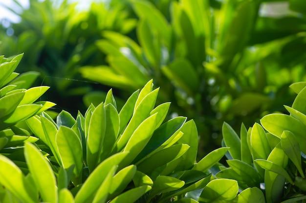 Зеленые листья в мелком фокусе для обоев
