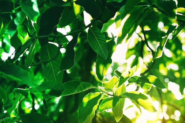 森の中の晴れた日の日光の下で緑の葉。ドロミテ、イタリア、ヨーロッパの自然。