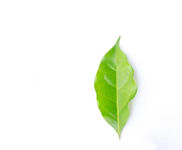 緑の葉、白い背景で隔離