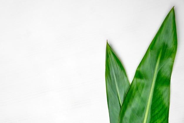 コピースペースを持つ白いテーブルに分離された緑の葉。