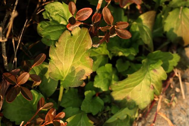 Green leaves in korea