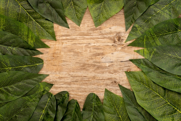 Green leaves laid out on a wooden brown background