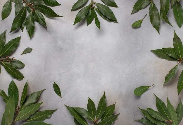 Green leaves of laurel food frame gray concrete surface