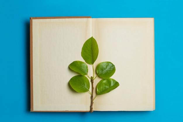 Зеленые листья лежат на открытой книге