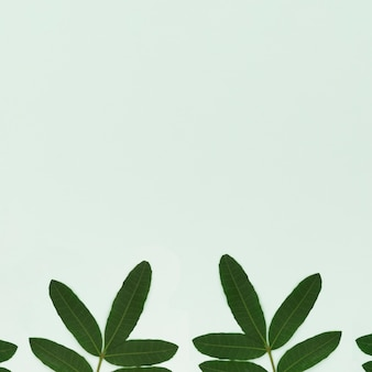 Green leaves on light green background