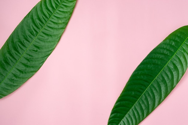 Green leaves on light pink background