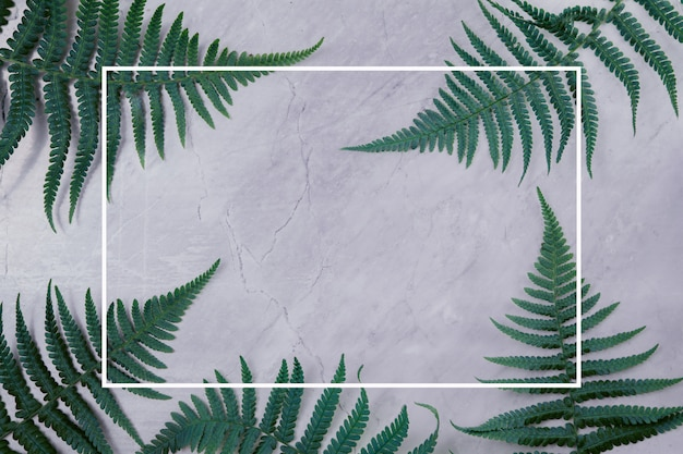 Green leaves on a marble background