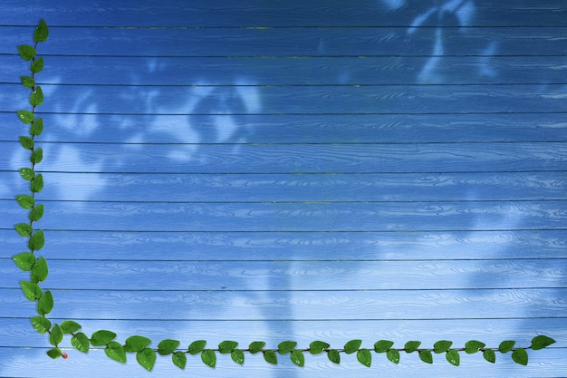 Green leaves of mexican daisy nature border and shadow tree on blue wood