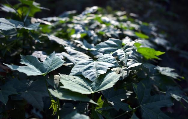 Зеленые листья естественный абстрактный фон свежая природа текстуры с размытым боке луч солнечного света