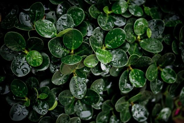緑の葉の自然な背景、葉のテクスチャ、葉