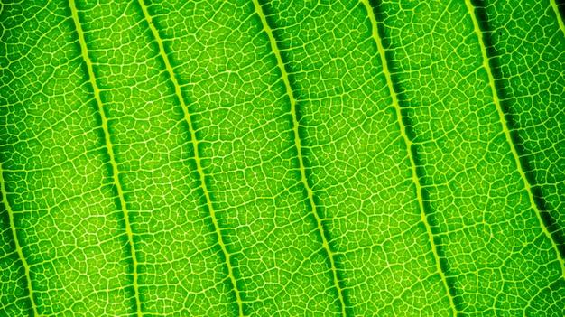 緑の葉の自然な背景の壁紙、葉のテクスチャー、テキスト用のスペースと葉