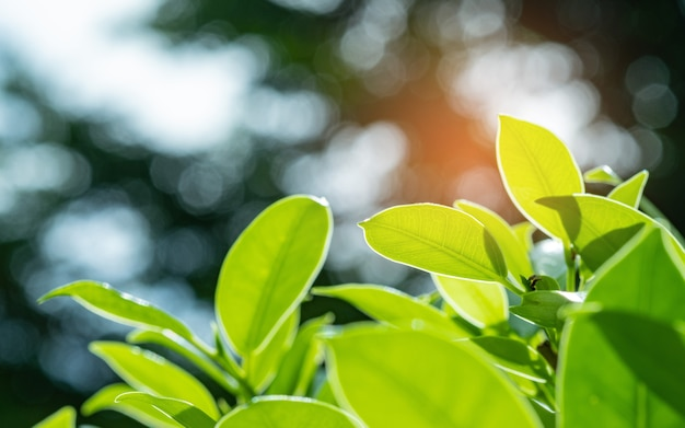 緑の葉自然、葉の質感、テキスト用のスペースと葉