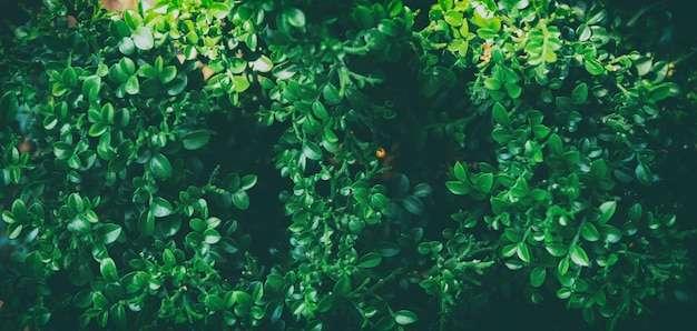 Green leaves nature background concept creative made of spring