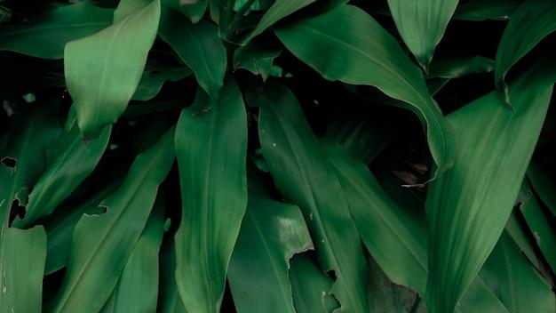 緑の葉自然背景壁紙