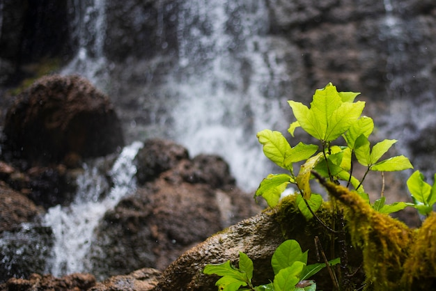 Green leaves near a waterfall