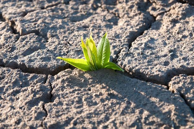 작은 나무의 녹색 잎은 마른 땅의 갈라진 틈에서 싹이 트고, 가뭄, 위에서 본 클로즈업