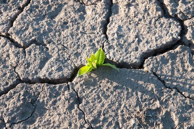 마른 땅, 가뭄, 위쪽 전망의 균열에서 작은 나무의 녹색 잎이 돋아납니다.