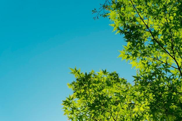 태양과 푸른 하늘의 배경에 대해 나무의 녹색 잎
