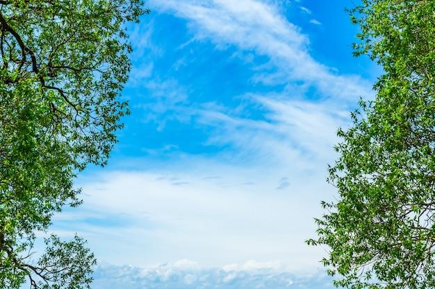 푸른 하늘에 대 한 나무의 녹색 잎입니다. 하늘에 대 한 단풍의 아름 다운 자연 프레임입니다. 공간을 복사 합니다.
