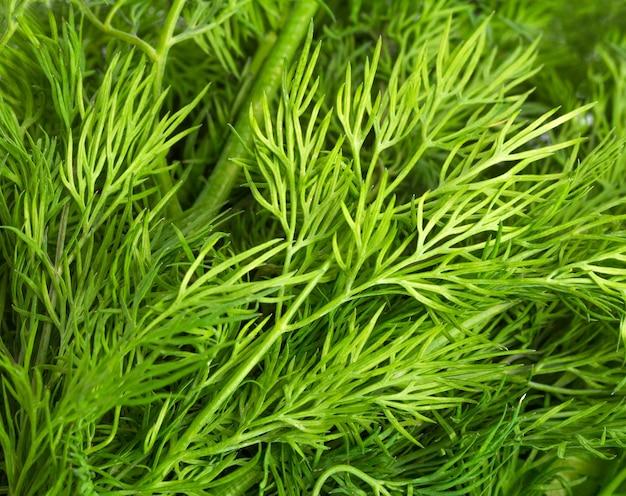 Зеленые листья укропа
