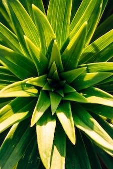 백합의 녹색 잎을 닫습니다.