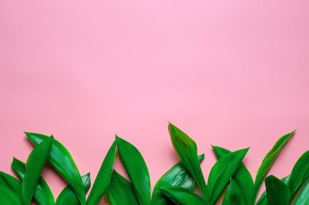 コピースペースフラットと花のボーダーとして谷のリリーの緑の葉はピンクの孤立したbで横たわっていた...