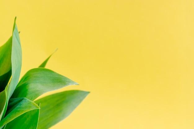 スズランの緑の葉