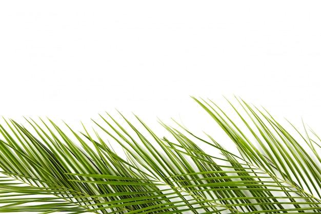 分離されたヤシの木の緑の葉