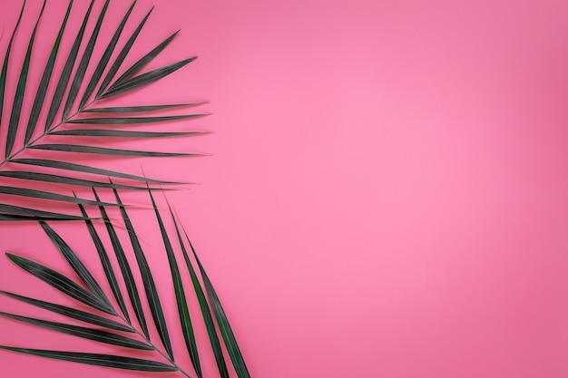Зеленые листья пальмы на ярко-розовой пастели