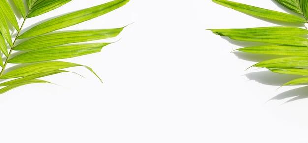 Зеленые листья пальмы на белом фоне.