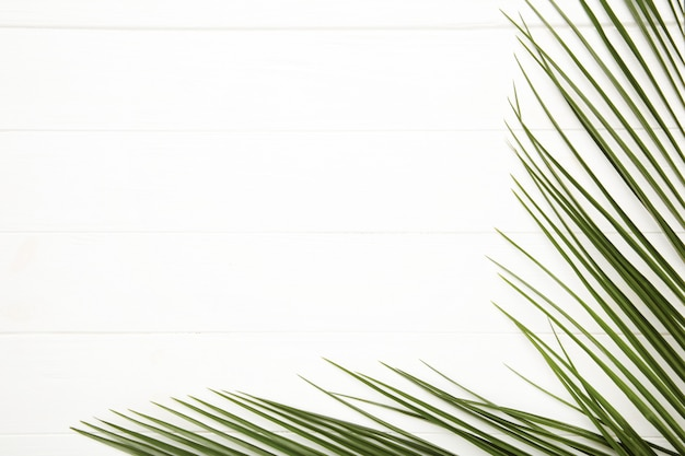 白い木製の背景にヤシの木の緑の葉