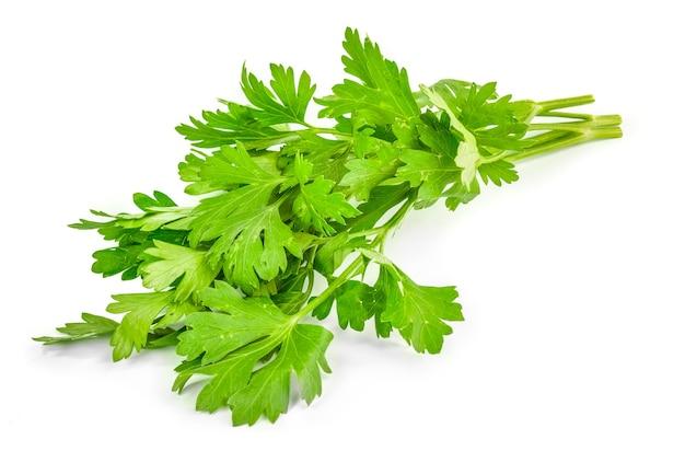 파 슬 리 흰색 절연의 녹색 잎