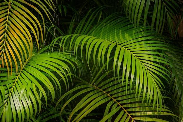 열 대 야자수 배경의 녹색 잎입니다.