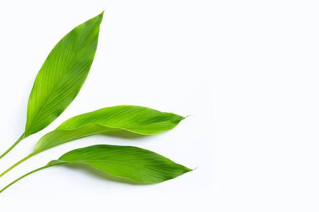 ウコンの緑の葉。