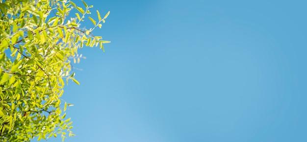 푸른 하늘 배경에 녹색 잎입니다. 복사 공간이 있는 배너