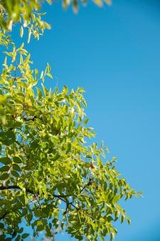 푸른 하늘 배경에 녹색 잎입니다. 복사 공간이 있는 배너.