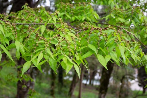 公園の春の木の枝に緑の葉。自然な背景