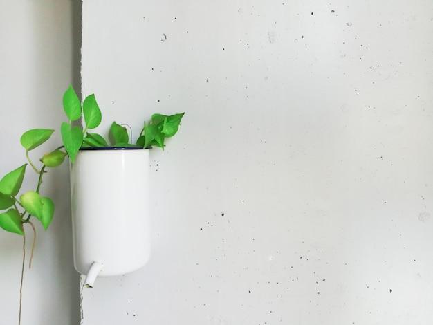 白い壁に緑の葉。