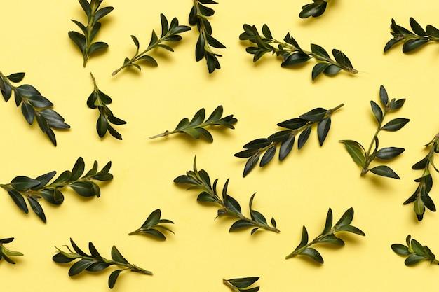 黄色の創造的な明るい表面に緑の葉
