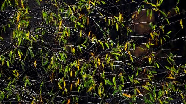 Зеленые листья на весенней ветке. естественный фон.