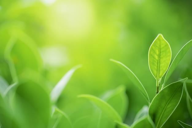 흐린 된 녹지 나무 배경에 녹색 잎