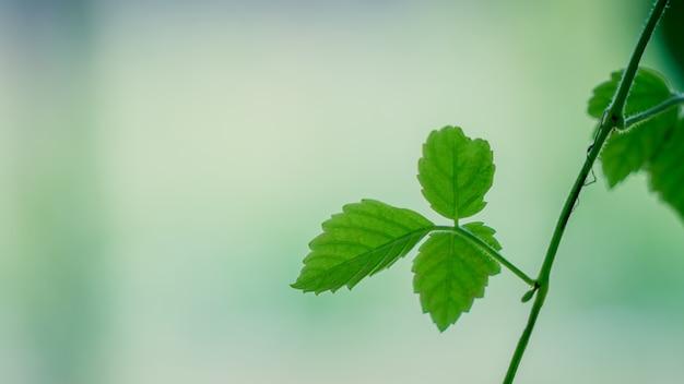 枝に緑の葉